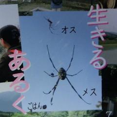 blog賀状2.jpg