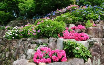 blog87柳谷.jpg