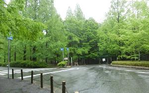 blog06森林植物園.jpg
