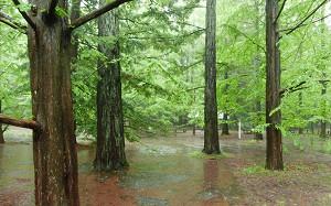 blog07森林植物園.jpg