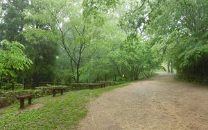 blog08森林植物園.jpg