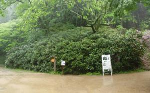 blog09森林植物園.jpg