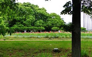 blog51長居植物園.jpg