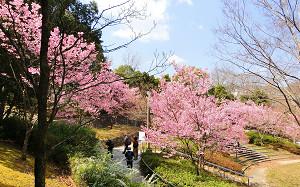 blog52北ひばりが丘公園.jpg