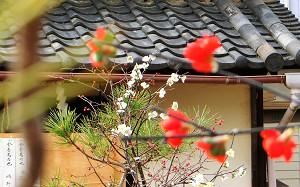 blog53八尾神社.jpg