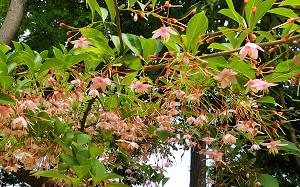 blog58長居植物園.jpg