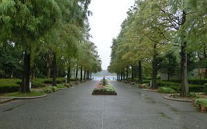 blog63長居植物園.jpg