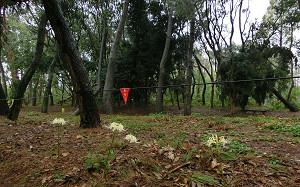 blog71長居植物園.jpg
