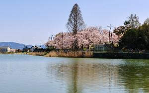 blog83大池.jpg
