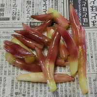 blog茗荷01.jpg