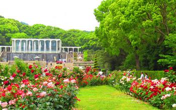 blog03須磨離宮公園.jpg