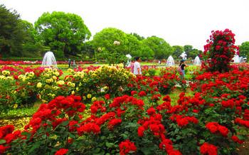 blog07須磨離宮公園.jpg