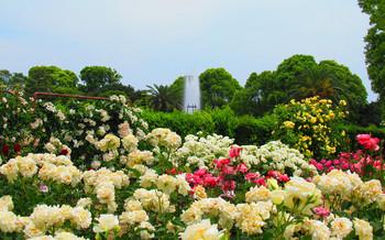 blog12須磨離宮公園.jpg