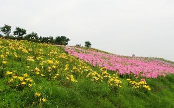 blog54舞洲ゆり園.jpg