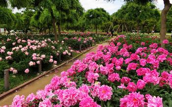 blog54長居植物園.jpg
